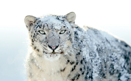 apple-snow-leopard-wallpapers-outed-24